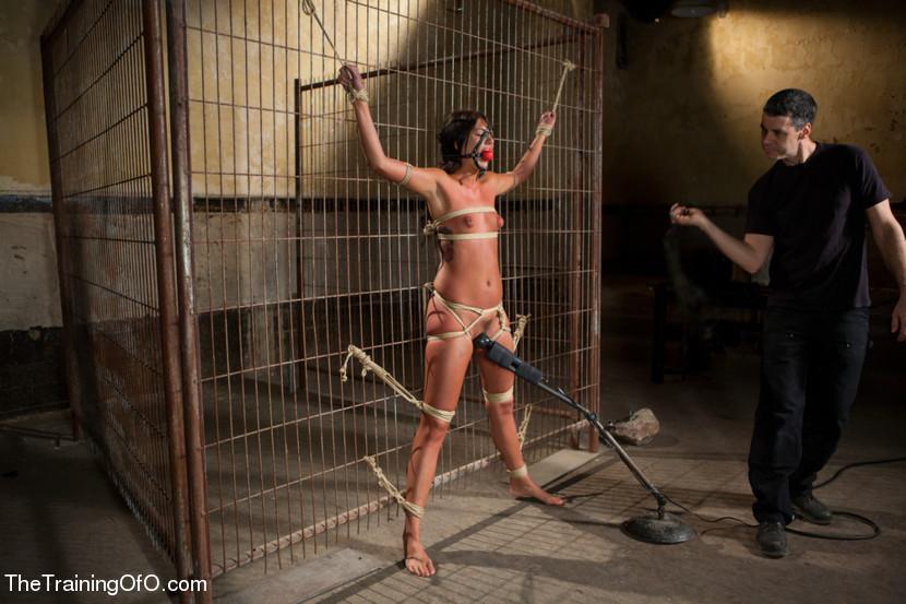 The Training of Cassandra Nix, D