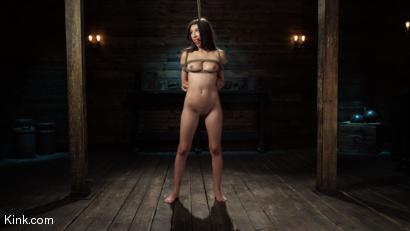 Fresh Meat: Maya Woulfe Endures