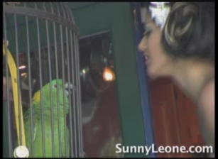 Sunny And The Parrot