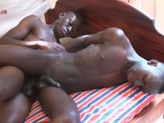 Black Bareback Safari