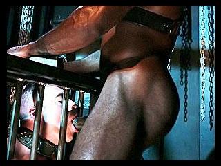 Hog - The Leather File